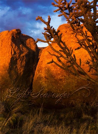 Sandia Foothills Golden Hour