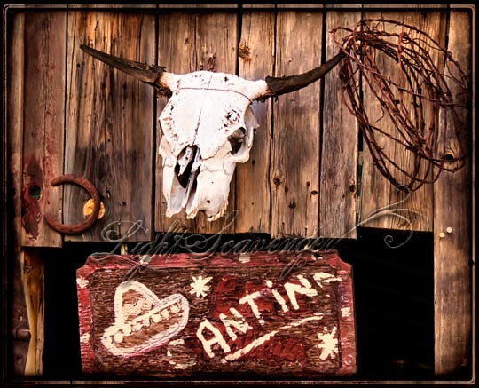 Cow Skull and Cantina