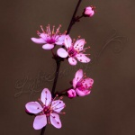 Plum Blossoms and Stucco