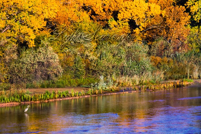 Fall Along the Rio Grande
