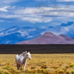 Running Free in the San Luis Valley