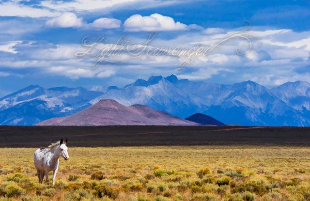 Horse, San Luis Valley