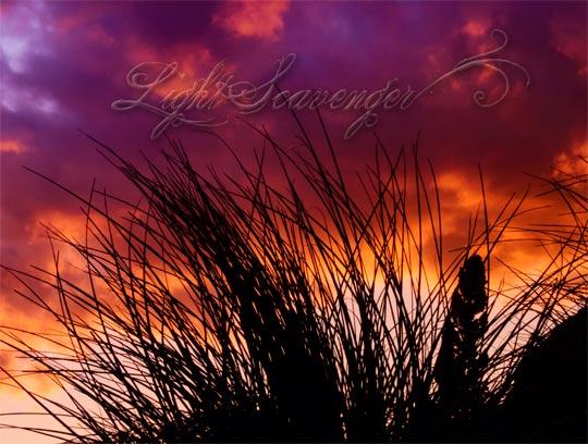 Beargrass Silhouette