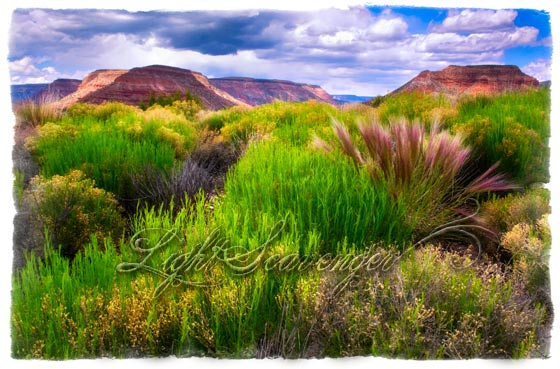 Jemez: Mesas and Grass
