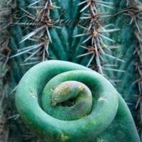 Botanic Garden: Cactus