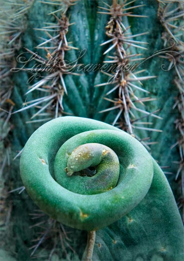 Botanic Garden: Cactus and Succulent