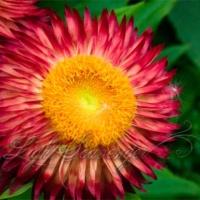 Botanic Garden: Color Blast