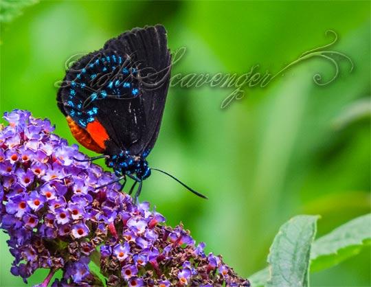 Botanic Garden: Exotic Butterfly