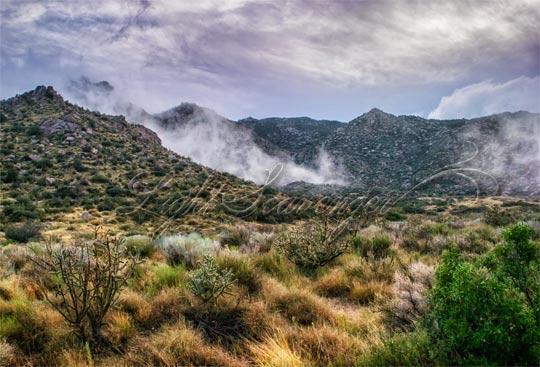 Fog in the Sandia Foothills