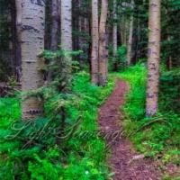 Sandia Crest Trail