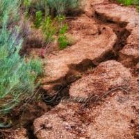 Rain-Damaged Trail