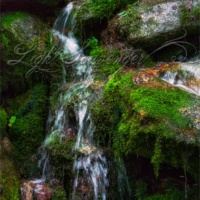 Tumbling Mountain Stream