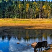 San Gregorio Lake and Cow