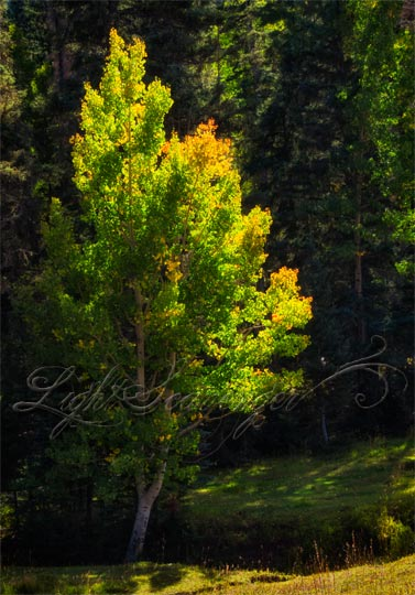 Aspen on the Cusp of Fall