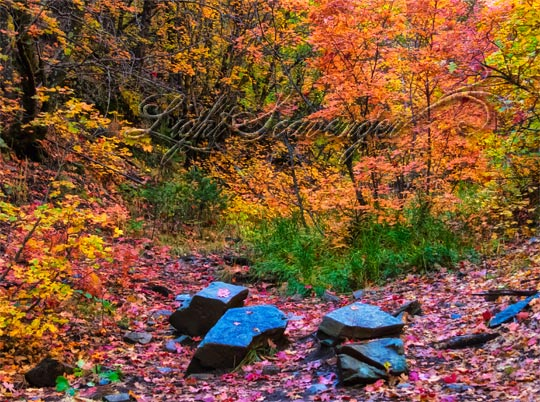 Fallen Leaves in Fourth of July Canyon