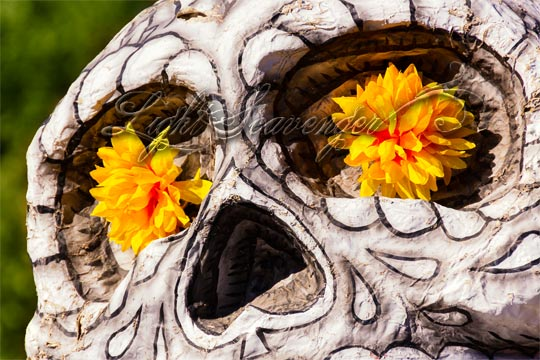 Skull with Marigolds