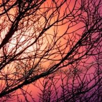 Flat Sun / Bare Branches