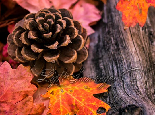 Maple Leaf and Pine Cone Collage