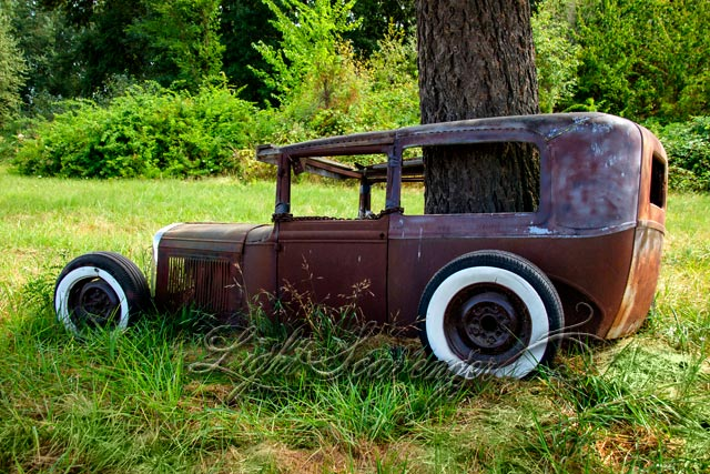 Rusted Car and Tree
