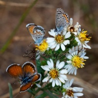 Late Season Butterflies