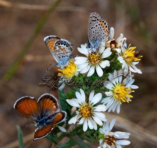 Fall Butterflies